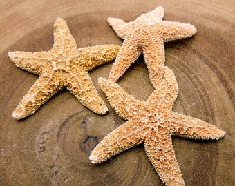 30% off Clearance Starfish-- Gorgeous Starfish- Amazing Wonder Of Nature (RK2B15-02)
