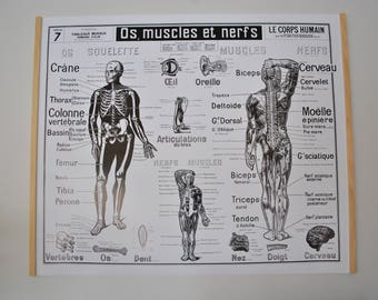 Reproduction of a former school N7 France body by Dr. Galtier-Boissiere table (poster)