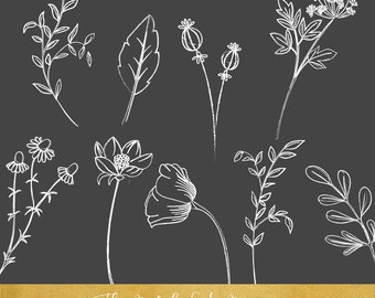 Meadow and Field Flowers Clipart Set 1 - Sketched Style - INSTANT DOWNLOAD - 30 .PNG Images