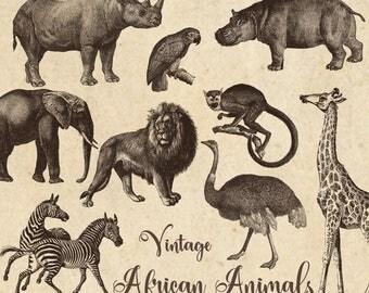 Vintage African Animals Clipart, antique safari illustrations, png clip art, elephant, lion, zebra, giraffe digital download, commercial use