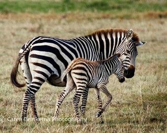 Momma Zebra and Newborn