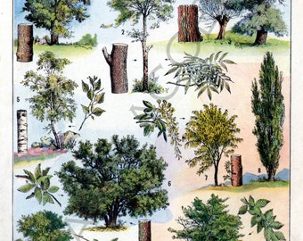 Instant digital download of 'Arbres' Trees, from 'Nouveau Petit Larousse Illustré, a French Encyclopedia. Useful teaching aid, Dated 1952
