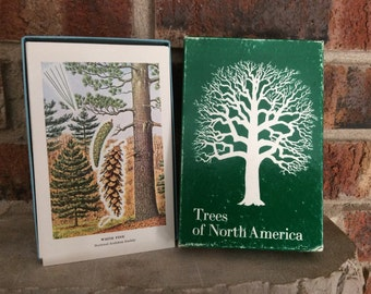 Vintage Trees of Northern America Cards / National Audubon Society Tree Educational Cards