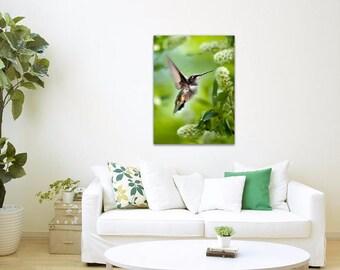 Hummingbird Wall Art Canvas Print, Hummingbird Art, Nature Photography, Canvas Art, Hummingbird Photo, Wildlife Prints, Summer Cottage Decor