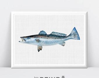 Fish Print, Fish, Beach Decor, Coastal Wall Art, Coastal Decor, Beach, Fish Decor, Printable Art, Large Wall Art, Printable Poster