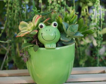Cute Green Frog Planter with live Succulents