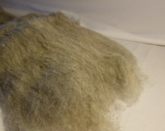 Raw wool of the Herdwick carded sheep,
