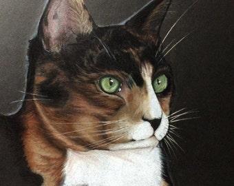 Custom Pet Portraits Color pencil Illustration