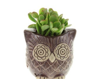 Brown Ceramic Owl Pot w/ Succulent - Succulent Pot, Owl Planter, Succulent Planter, Succulent with Pot, Owl Gifts, Whimsical Pot, Owl Pot