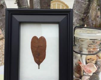 Framed heart shaped leaf