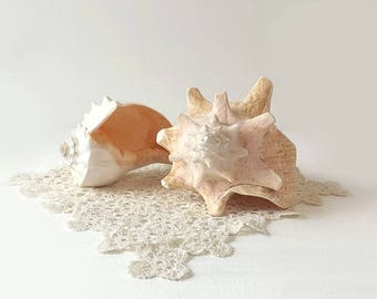 Natural Conch Shells, 2 Vintage Seashells, White, Pink & Beige, Marine Life Sea Collectible, Nautical Beach Home Decor