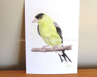 Goldfinch - Watercolor 5x7 or 8x10 Giclee Bird Print