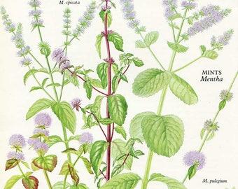Vintage Wild Plants & Herbs Bookplate Illustration, Print for Framing, Mints, Mint Varieties, Herbal Print,  Botanical Print, Kitchen Decor