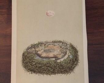 Antique Nest and Egg Print - Morris - Great Tit