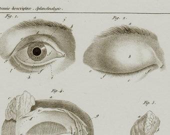1840 Antique anatomy print, eyes medical chart, optical chart, optician chart, medical print, organs of View, original antique 176 years old