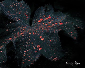 Horror Print - 8x10 Red Droplets on Leaf, Dark Art, Dark Print,Weird Art, 8x10, Creepy Print,Blood Drops,Spooky, Gothic Art, Blood Red, Goth