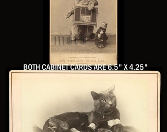 TWO Wonderful Rare & Unique Antique Cabinet Cards of Cats!