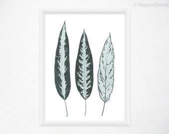 Aglaonema Leaves Print - Watercolor Leaves, Botanical Art / 8x11 Wall Art, Tropical Wall Decor