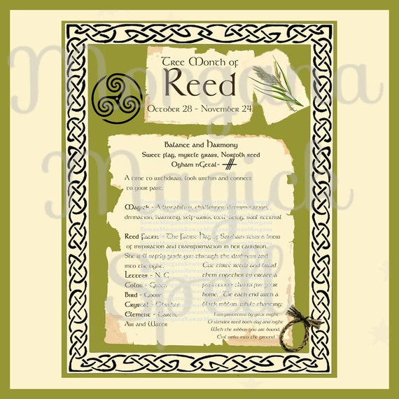 REED CELTIC SACRED Tree - Digital Download, Book of Shadows Page,Grimoire, Scrapbook, Spells, White Magick, Wicca, Witchcraft, Herb Magic