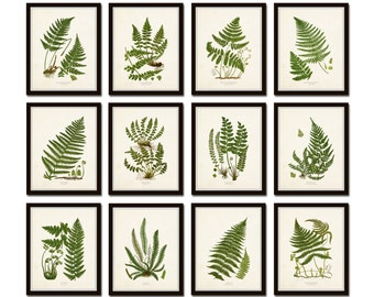 Vintage Ferns Print Set No. 35, Giclee, Botanical Art, Botanical Print Set, Vintage Fern Prints, Illustration, Vintage Botanicals, Art Print