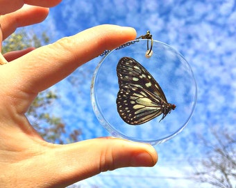 Preserved Genuine (naturally passed) Butterfly, Large Pendant Necklace.
