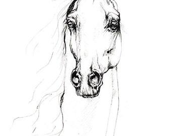 original pen drawing of an arabian horse
