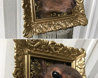 Squirrel Head Mount 012- Brown in Gold Fancy Filigree Frame - Real Taxidermy