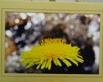 Wild Flower,  Blank Photo Card with Envelope