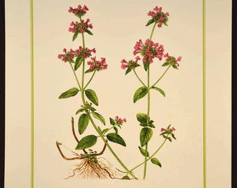 Wild Basil Print Flower Wall Decor Nature Botanical Art