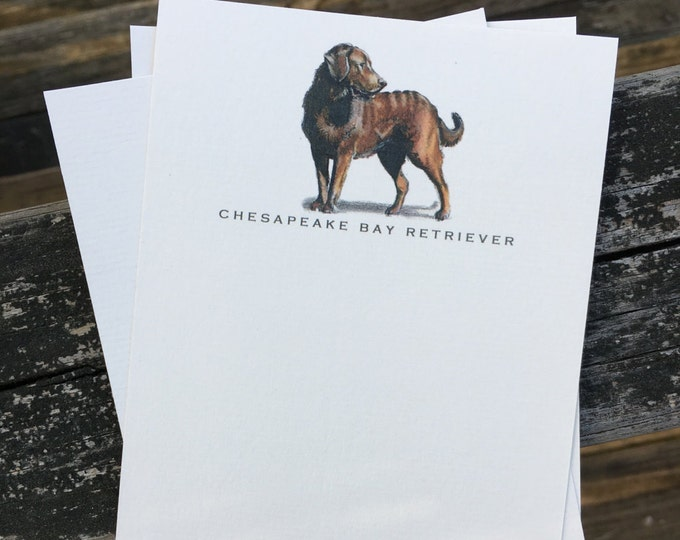 Chesapeake Bay Retriever Dog Note Card Set