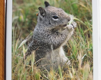 Ground squirrel with lady bug photo note card