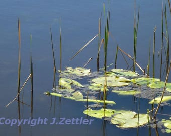 Golden Pond, Clear View, Bavarian Landscape, Germany, Photo Print, Lakeview
