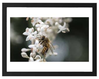 White flower bee posters, digital download, digital printing, creative
