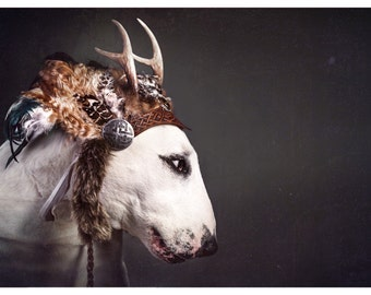 Wild At Heart - Bull Terrier Photographic Art Print
