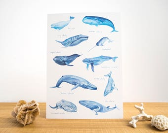 Whales of the World Watercolour A4 Print // Painting Art Print of Whales // Blue Whale // Beluga // Narwhal // Humpback // Save the Whales