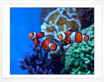 Fish From Finding Nemo Clownfish Photo Kids Room Childrens Bathroom Nursery Decor