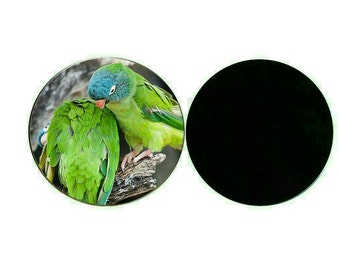 Blue-crowned Conure 55mm Button Refrigerator Fridge Magnet (PG-0774)