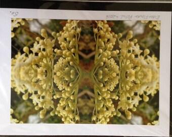 Elderflower Bud Being Large Greetings Card