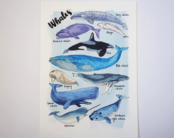 Whales Nature Print