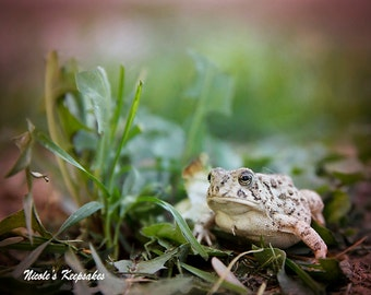 I Toad You So