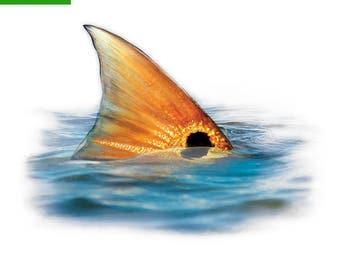 Tailing Redfish Decal - Tailing Redfish Sticker