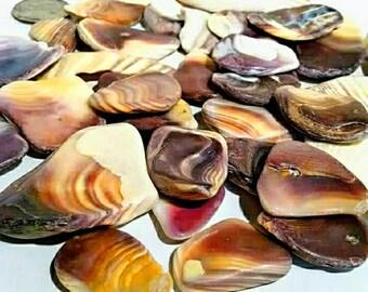 Wampum Shell Pieces -Hand Collected, quahog shells, craft shells, bulk shells, beach decor, wampum beads, beach decor, clam shells