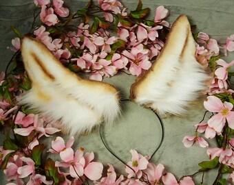 Brown Bunny Ears