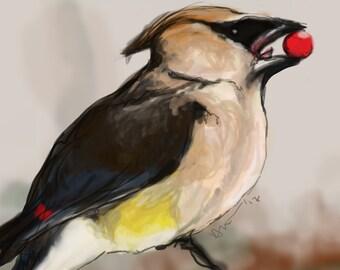 Cedar Waxwing Giclee Bird Print