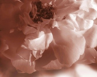 "Art Photography ""Sepia Rose"" Pink Tones Digital Printable Art Floral Photograph Roses"
