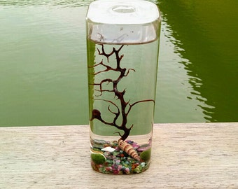 Rectangle Terrarium Kit with Living Moss Ball,Tiny Round Tourmaline Gravels,Sea Fan and Seashells,Ocean Home Decor,Unique Gifts for Friends