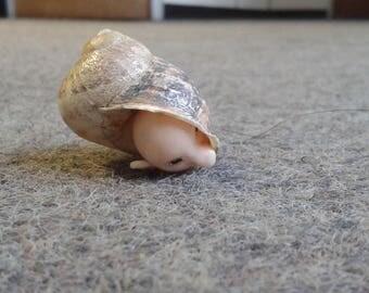 snail person hiding in shell, mini sculpture