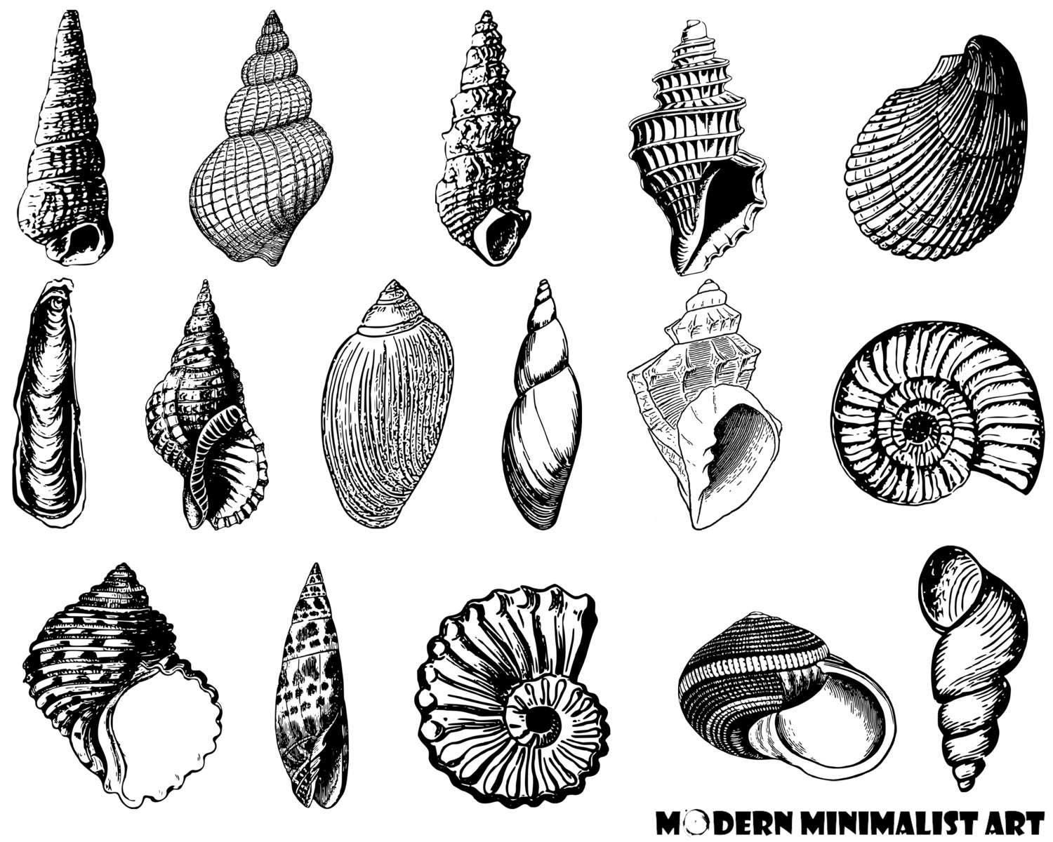 seashells clipart black and white� 16 png images from
