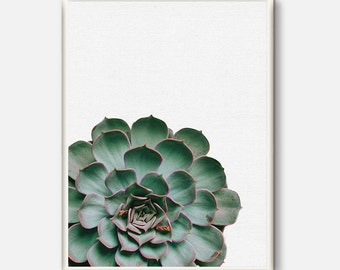 Nature Photography, Green Wall Art, Photography Print, Succulent Photo, Nature Printable Art, Cactus Photography, Green Art, Mint Green Art