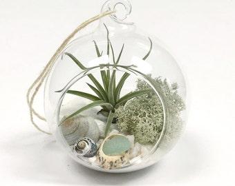 White Sand Air Plant Terrarium Kit in Hanging Glass Globe • Tillandsia personalise gift diy wedding garden plant wall decor boho home custom